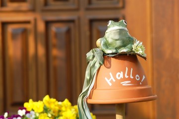 Hello Frog_Outdoor