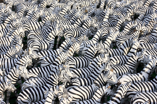 Zebra sculptures background many