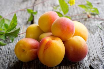 group of apricot - gruppo di albicocche