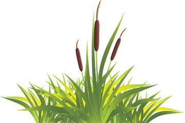 Cane with grass. Vector