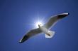太陽光線とカモメ