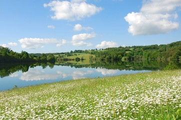 Lac, champ de marguerites