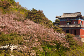 blossom and shrine