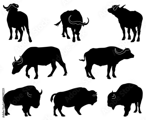 Bison and Buffalo