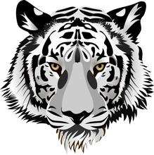 Tygrys head.vector