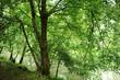 alberi 957