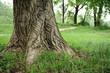 alberi 967
