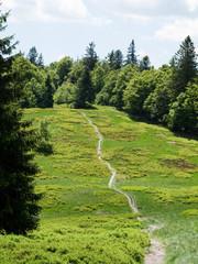Sentier sur les chaumes des Vosges