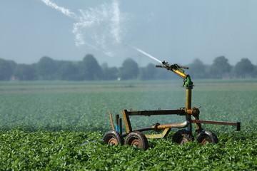Feldbewässerung