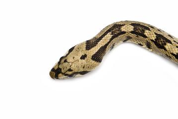 Cabeza de la serpiente.
