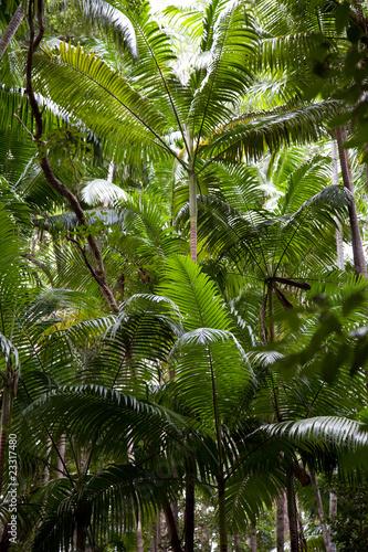 tropikalne-lasy-deszczowe