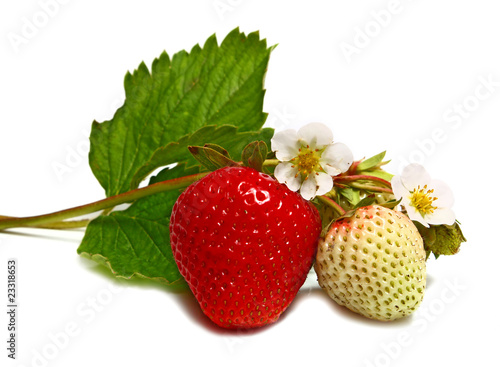 white and red strawberry and blossom on branch