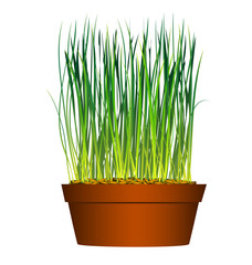 grass from seeds in flowerpot