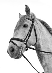 Abbild eines Pferdes