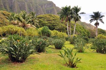 Rural Oahu