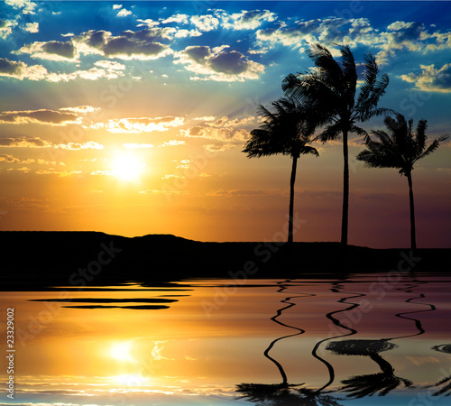 sunset beach and palm tree