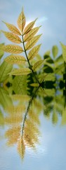 bunte Wiese mit Wasserspiegelung