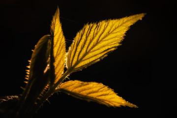 Pflanze in der Dämmerung