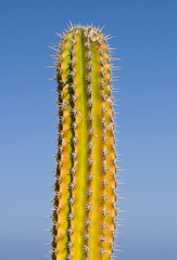 Cactus over blue sky