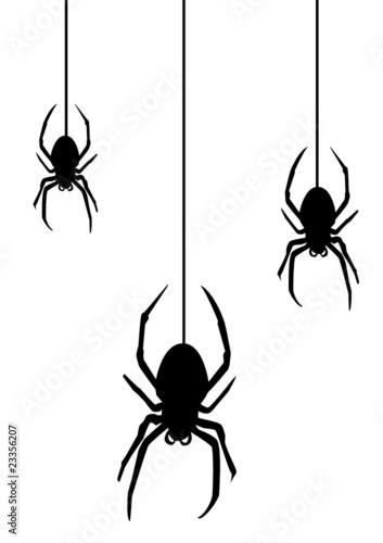 Spider2010 - 23356207