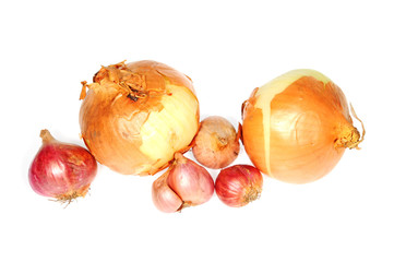Two Types Of Onions On White background