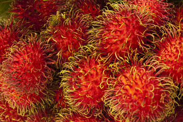 Fruit Of Thailand