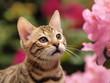 Bengale flehmt an rosa Blüten