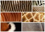 peles de animais selvagens poster