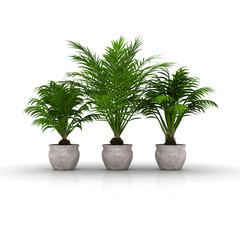 3 Blumentöpfe mit Palmen