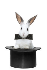 A view of a rabbit with bow tie in a hat isolated on white