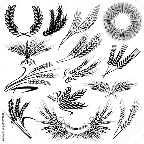 Wheat ears & laurel wreath & wheat sheafs - 23377851