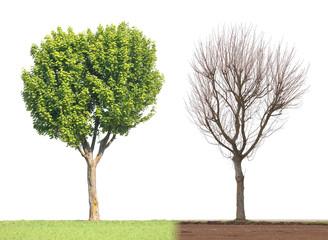 arbre saison printemps hiver feuille branche nu tronc vert
