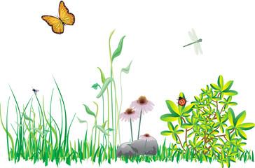 Wiese fruehlings Insekten