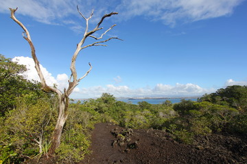 Hiking Trek at Rangitoto Volcano Island