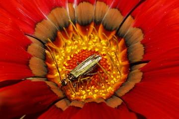 Flor con insexto