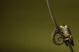 tree frog treefrog amphibian jungle background copyspace poster