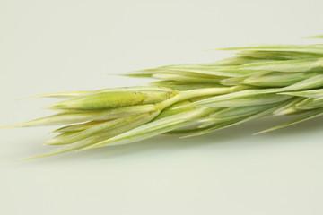 Gräser13