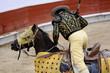 Picador and Horse - 23394816
