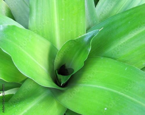 hawaii plant life