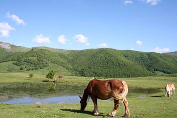 Cheval et lac, Cantal