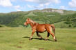 Cheval en Auvergne