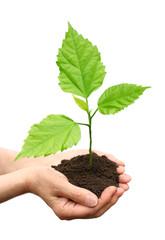 Hand holding green  tree