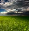 Storm over meadow