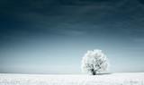 Zimowa łąka otulona białym puchem