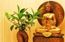 Goldener Boeddha