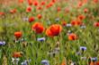 Feldblumen im Gegenlicht