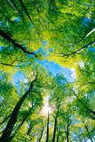 Fototapety Tree canopy