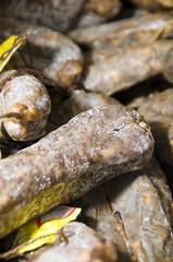 sausage salami of Corsica France