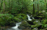 Mossy creek panorama