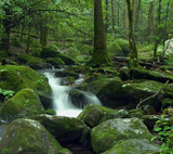 mossy cascading creek